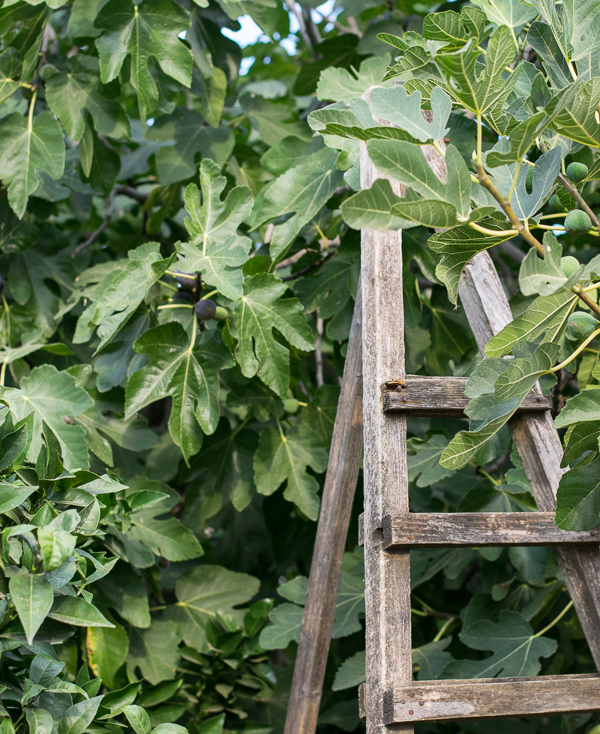 driedfigs10